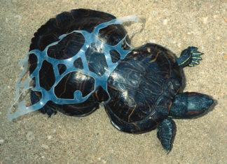 Mediterranean turtle pollution plastic