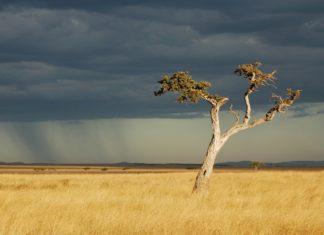 Kenya, Rainfalls, Rainwater Harvesting