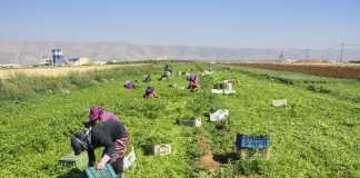 agriculture lebanon
