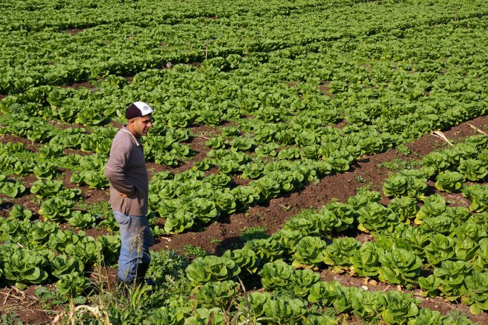 lebanon agriculture